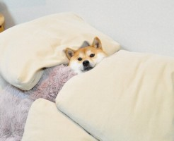 枕が変わると寝られない