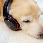 不眠症を改善させる音楽のチカラ