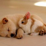 ドキドキして眠れない時の対処方法、おすすめサプリのマインドガードdx!