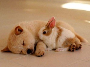 attack-of-the-cute-08-dog-rabit