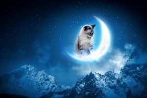 cat-dream