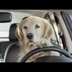 睡眠不足で運転する時に気をつけるべきこと!